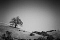 Lone tree in the meadows a single monte bello california Royalty Free Stock Photos