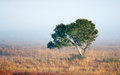 Lone tree in mist green grassy field on a misty morning Stock Images