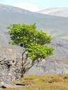 The lone tree this natural contrast of colour highlights beauty of nature Stock Photos