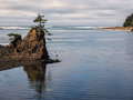 Lone tree on rock at coastal bay a struggles to survive a outcrop in siletz lincoln city oregon Stock Image