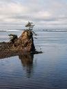 Lone tree on rock at coastal bay
