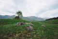 Lone tree scotland single on rocky highlands of isle of skye Stock Image