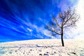 Lone tree on snowy field a with bright sun creating a shadow and bright blue sky with clouds behind Royalty Free Stock Images