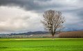 Lone Tree After The Storm Royalty Free Stock Photo