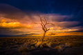 Lone Tree at Sunset Pyramid Lake Royalty Free Stock Photo