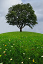 A lone tree on a top of a green hill Royalty Free Stock Photo