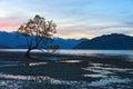 The lone tree twilight Royalty Free Stock Photo
