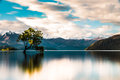 The lone tree of wanaka on shore lake in new zealand at sunset Royalty Free Stock Photography