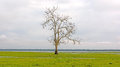 Lone Tree on a Wetland Marsh Royalty Free Stock Photo