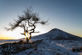 Lone Tree in a winter landscape - Roseberry Topping - North Yorkshire - UK Royalty Free Stock Photo