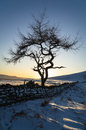Lone Tree - Winter Royalty Free Stock Photo