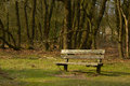 Lonely bench on the forest edge Royalty Free Stock Photo
