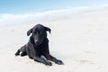 Loneliness dog on the beach summer Royalty Free Stock Photo