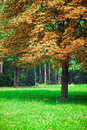 Lonely autumn chestnut tree autumn landscape Royalty Free Stock Photography