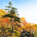 Lonely autumn tree Royalty Free Stock Photos