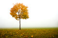 Lonely autumn tree Royalty Free Stock Photo
