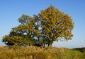 Lonely autumn tree with bypath Stock Photos