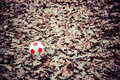Lonely ball soccer lies on fallen leaves Royalty Free Stock Photos