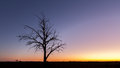 Lonely bare tree silhouette at dusk Royalty Free Stock Photo