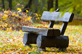 Lonely bench in the park autumn time Stock Photo