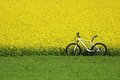 Lonely bicycle standing besides a crop field Stock Image