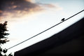 Lonely bird on electrical wire Royalty Free Stock Photo