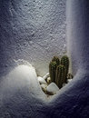 Lonely cacti a small group of growing in a nook on a wall Royalty Free Stock Images