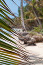 Lonely caribbean white sand beach and coconut palm trees behind leaves on little corn island in nicaragua Stock Images