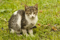 Lonely cat small kitten abandoned outdoors on the grass Stock Images