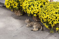 Lonely cat Royalty Free Stock Photo