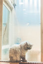 Lonely cat beside window on rainny day waiting vintage Stock Photography