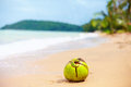 Lonely coconut lying on sandy tropical beach green Stock Photography