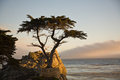 Lonely Cypress Tree Royalty Free Stock Photo