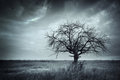 Lonely dead tree. Royalty Free Stock Photo