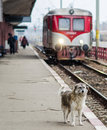 Lonely dog standing alone in a railway station Stock Photo