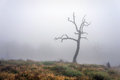 Lonely and dry tree with fog Royalty Free Stock Photography