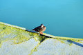 Lonely duck relaxing near the lake balaton in hungary Stock Photos