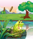 A lonely frog above the wood with algae illustration of Royalty Free Stock Images