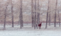 Lonely horse in front of snowy winter forest Royalty Free Stock Photo