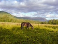 Lonely horse grazing in a field on background of mountains Royalty Free Stock Photo