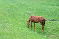 Lonely horse on a spring pasture Royalty Free Stock Image