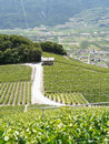 Lonely house in the vineyards of saillon Royalty Free Stock Photo