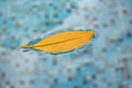A lonely leaf floating on the surface of the pool, subject to co