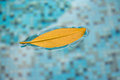 A lonely leaf floating on the surface of the pool, subject to cool autumn breeze. This nice clean aqua blue swimming pool reflects Royalty Free Stock Photo
