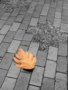 Lonely leaf on ground Stock Photography