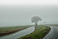 A lonely life tree represent near giethoorn holland Royalty Free Stock Photography