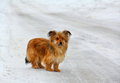Lonely Little Dog on a Snowy Road Stock Images