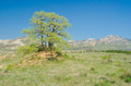 Lonely oak on a hill against mountain Royalty Free Stock Photography