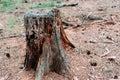 Lonely Old Dry Tree Stump.