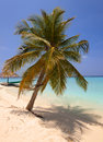 Lonely palm tree on a beach of the tropical island trees at ocean maldives Stock Photos